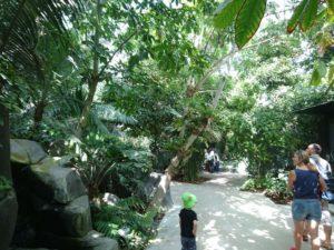Intérieur de la serre tropicale au parc zoologique de Paris