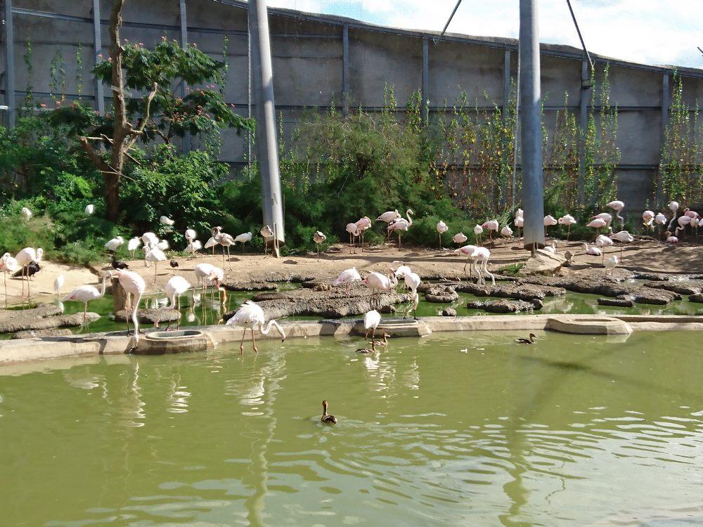 volière du parc zoologique de Paris