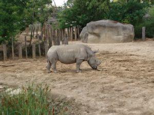 rhinocéros parc zoologique de Paris